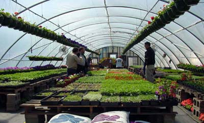 Greenhouse at Prairie Stream Produce