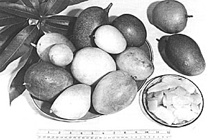 Mangoes grown in dooryards of southern Florida in the mid-1940's.