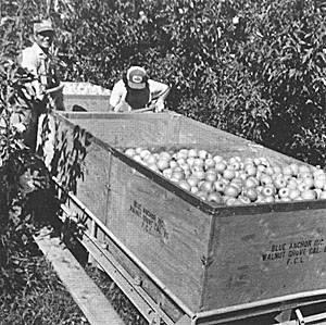 harvested fruits en route