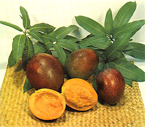 Mango varieties 'Kent', 'Tommy Atkins', and 'Irwin'