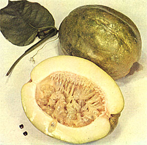 Giant Granadilla