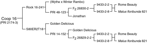 Pedigree of Co-op 16