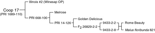 Pedigree of Co-op 17