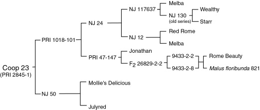 Pedigree of Co-op 23