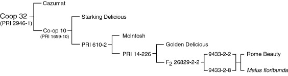 Pedigree of Co-op 32