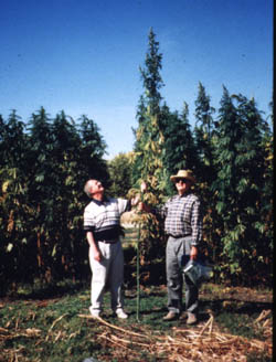 Low thc hemp research in the black and brown soil zones of for Soil zones of alberta
