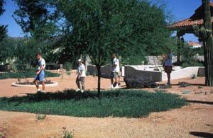 Acacia redolens Maslin, Desert Carpet